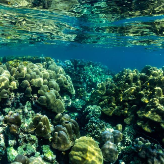 Fonds marins îles Surin